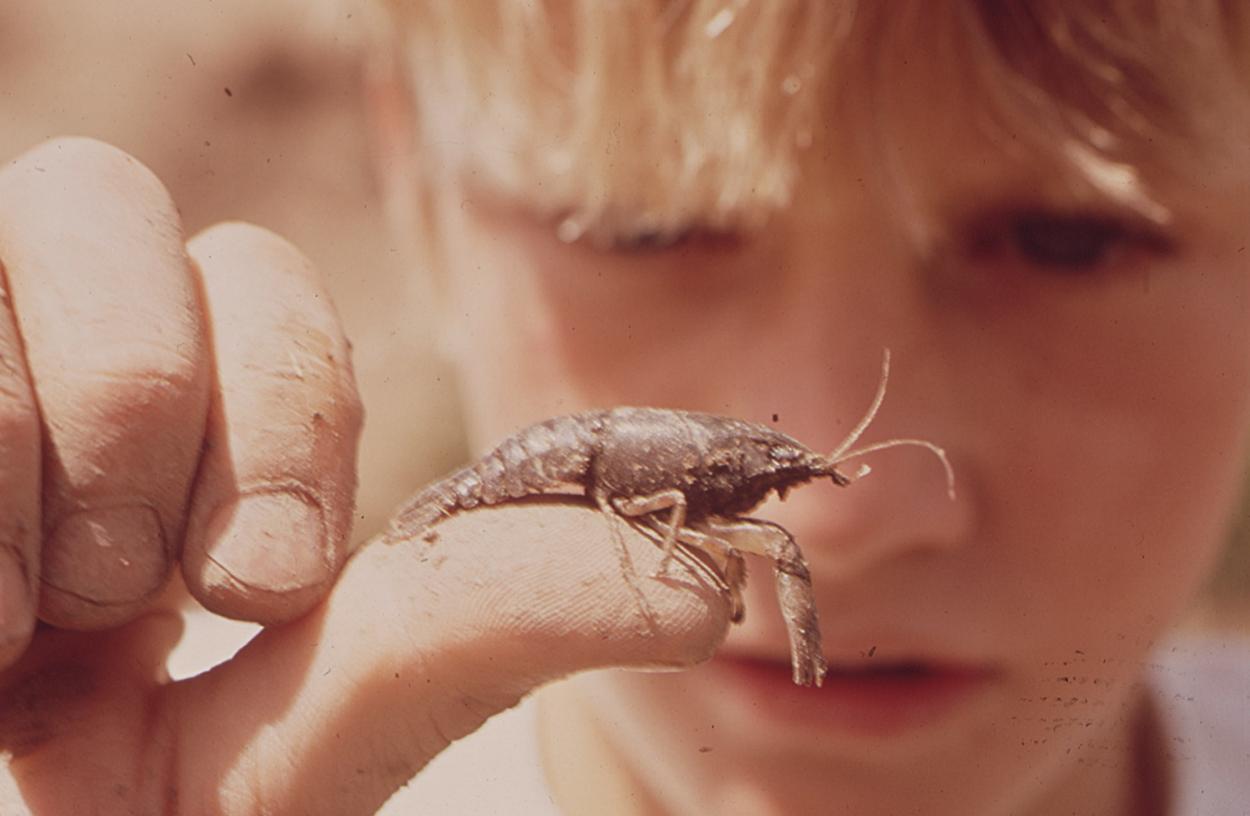 Crayfish boy